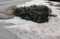 Christmas Tree Placed Curbside